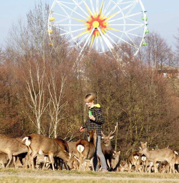 Tiere fuettern im Sonnenlandpark