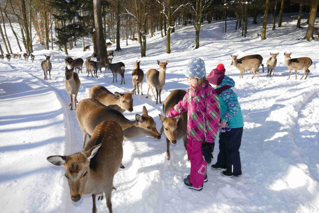 Wild-Erlebnistour im Schnee Sonnenlandpark