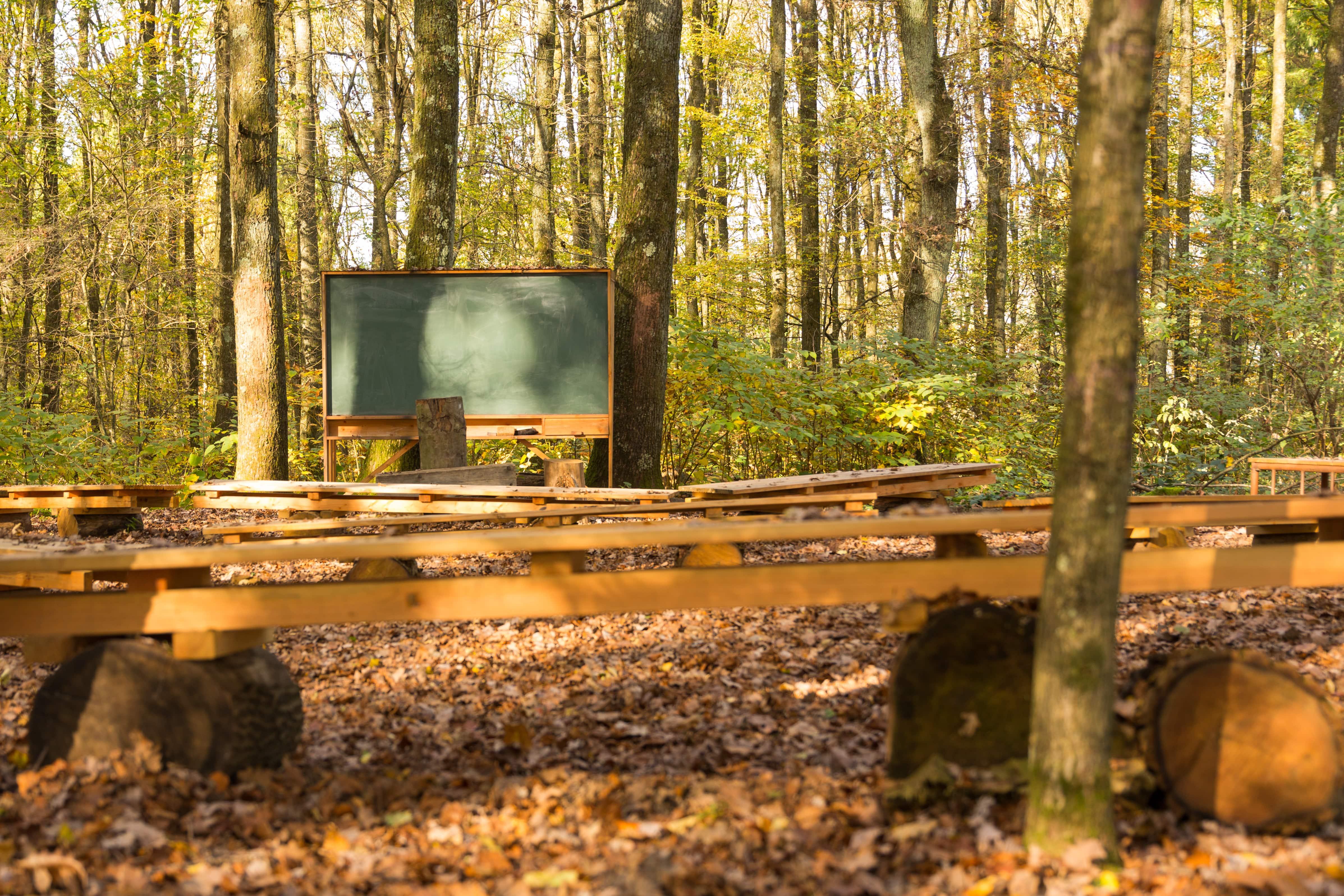 Grünes Klassenzimmer im Wald